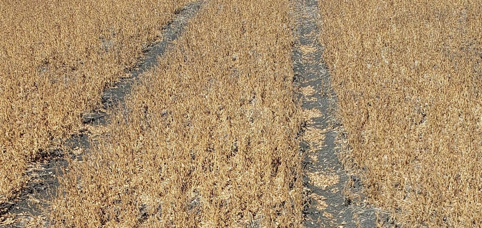 Yield Loss From Tire Tracks